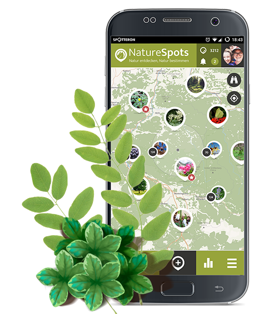 NatureSpots App with plants and leaves