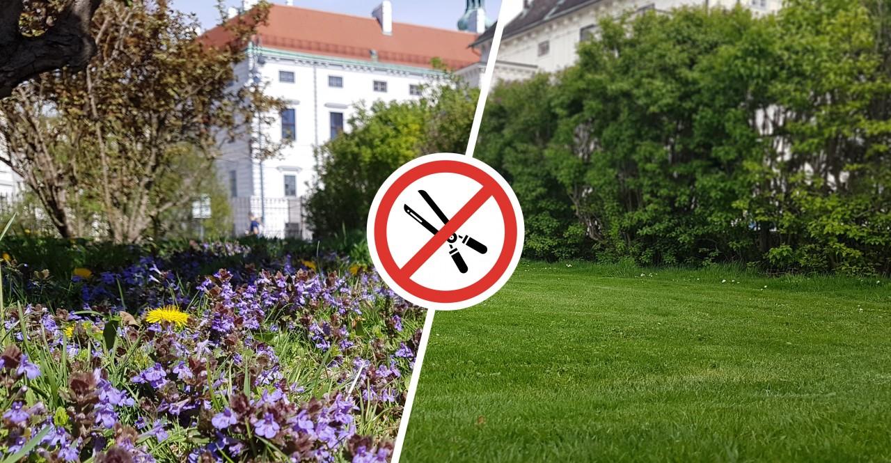 Warum mähen? Parks und Baumscheiben unter dem Messer
