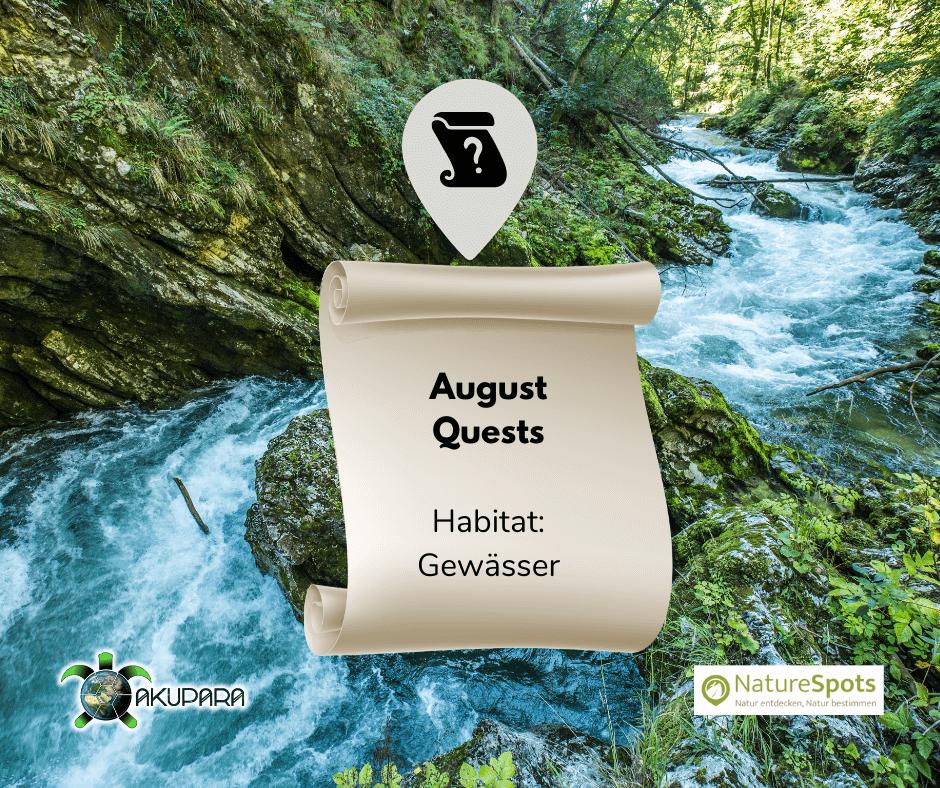 Questbook für Naturbeobachtungen - August