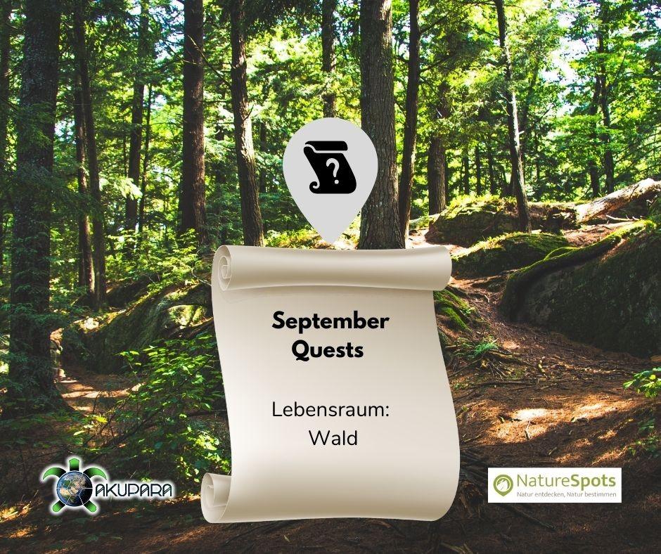 Questbook für Naturbeobachtungen - September